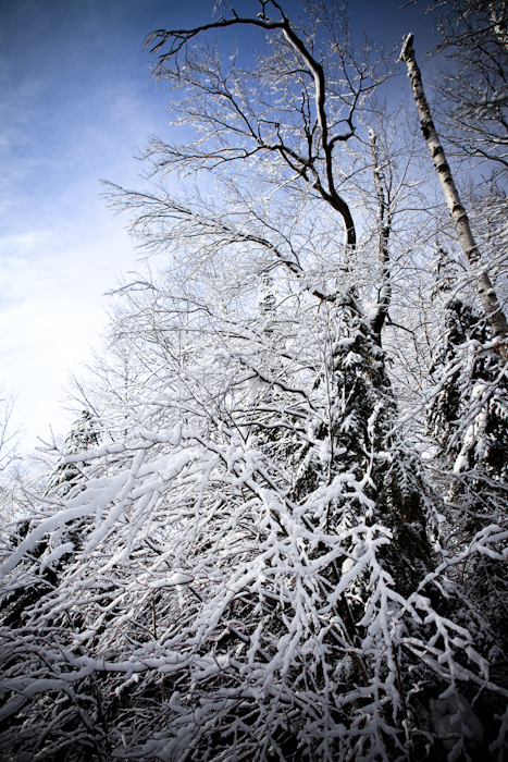 More Snowy Trees